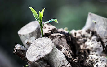 un germoglio d'erba cresce un tronco tagliato